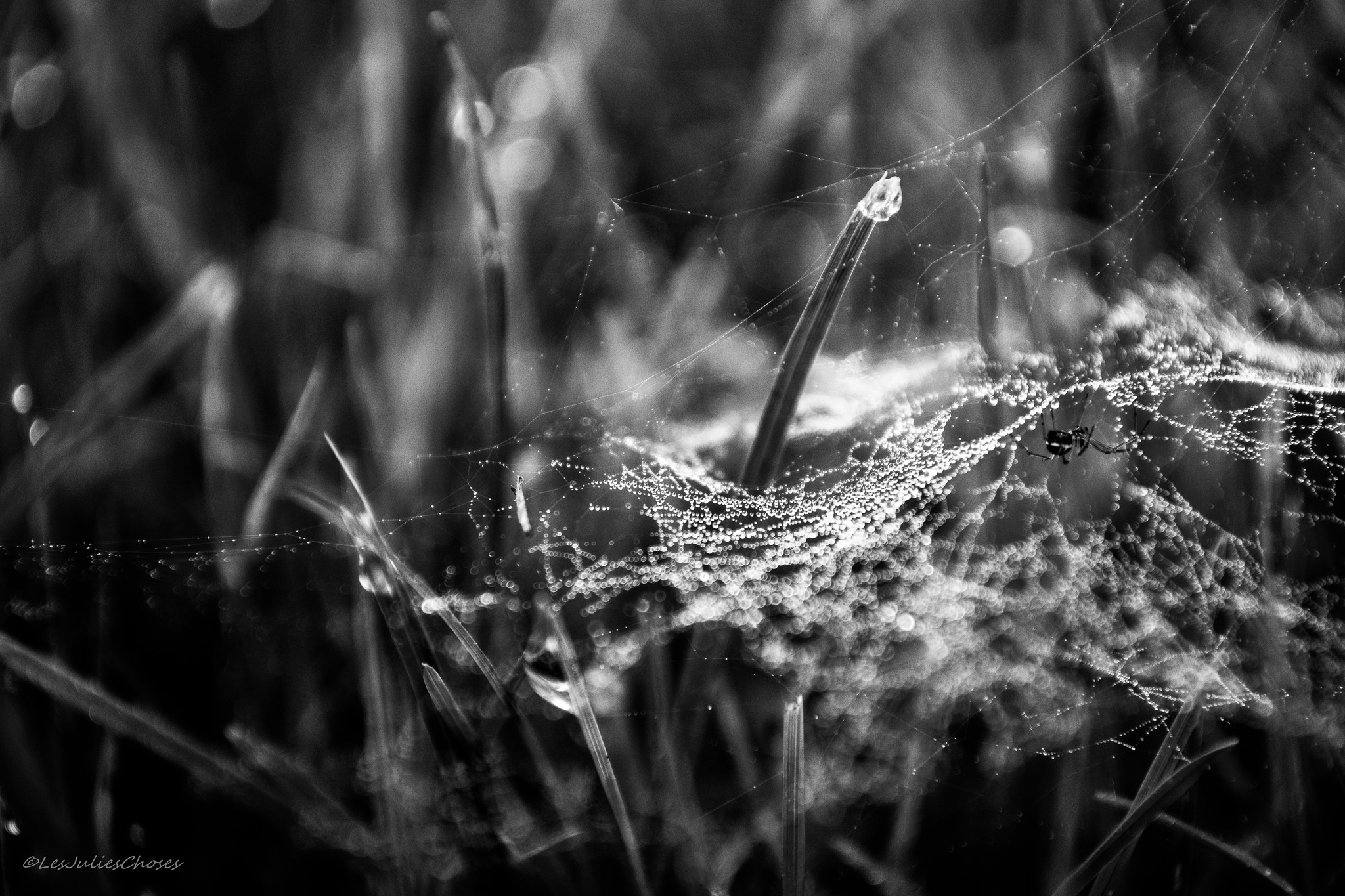 Black and white image of a dome-shaped spider web in the grass